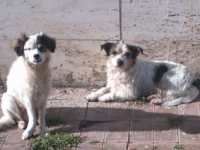 Frosolone, contributi per chi prende in affido i cani
