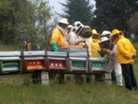 Api e miele, al via i corsi universitari