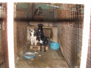 Emergenza maltempo, 200 cani a rischio a Mirabello