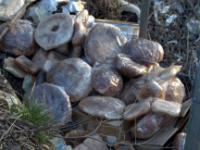Il pane non venduto va… nei fossi della Bifernina