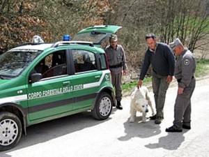 Cani senza microchip, pioggia di sanzioni nella Valle