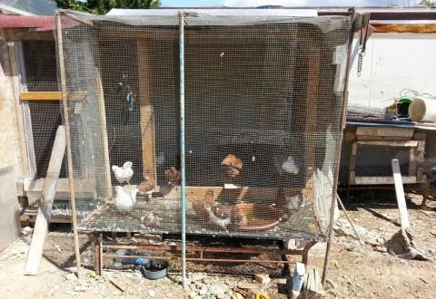 Cento colombi in condizioni disperate, denunciato rumeno