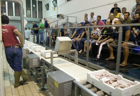 Il pesce fresco torna sui banchi, prime aste al mercato ittico