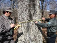 A Civitacampomarano ritorna il Comando della Forestale