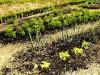 L'orto che si fa da solo, in Molise il corso di agricoltura sinergica