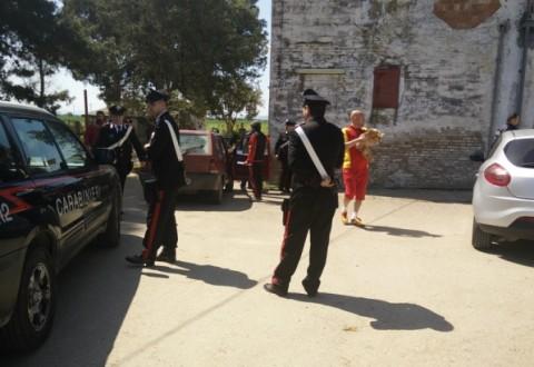 Blitz di Nas e Carabinieri nelle stalle: sequestrati i buoi delle Carresi