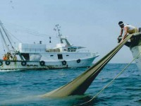 Settore ittico, altri 5 milioni per la cassa integrazione straordinaria