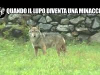 Le Iene scatenano le polemiche della 'Società italiana per la storia della fauna'