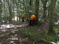 Operai forestali, l'Arsarp scorrerà la graduatoria