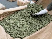 Tremiti, la Finanza sequestra 64 chili di marijuana