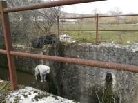 Veglia per giorni 'l'amico' cane morto nel canale, la triste storia di Mosè