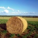 Agribond 2,4 milioni di euro per sostenere le imprese agricole