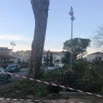 Inutili le proteste: ad Isernia addio ai pini su Viale 3 Marzo