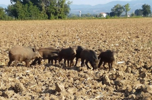 """""""Acli Terra"""" contro il referendum sulla caccia. Il presidente Mogavero: serve a controllare l'ambiente"""