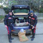 Colpo sventato a Bonefro, il basista accusato di concorso in rapina