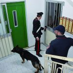 La droga del clan Spada per gli studenti di Isernia, arrestati cinque pusher
