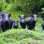 Animali selvatici, Isernia diventa un concentrato di biodiversità