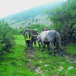 Ceppagna, toro finisce in un pozzo: per il salvataggio necessario l'intervento dell'elicottero dei Vigili del fuoco