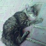 Campobasso, orrore a Vazzieri: gatto lapidato a morte da tre ragazzini