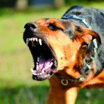 Pozzilli, furto sventato dai cani da guardia