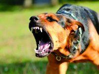 Rocchetta a Volturno, aggredita dai cani mentre passeggia: 36enne finisce al pronto soccorso