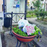 Cestino a pochi passi, rifiuti nella fioriera: sdegno social a Venafro