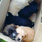 Abbandonati come fossero rifiuti, cinque cuccioli cercano casa