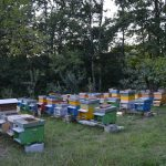 Il miele di Cercepiccola protagonista in Italia: quando il successo nasce dal territorio