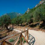Camminata tra gli olivi a Venafro, definito il programma