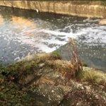 Schiuma bianca nel Rava, Nola: l'Arpa pubblichi subito le analisi