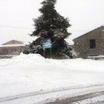 Neve e gelo, allarme di Coldiretti: nuovi danni dopo un 2018 nefasto