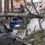 Temperature in picchiata e vento forte a Isernia: auto distrutte e alberi sradicati