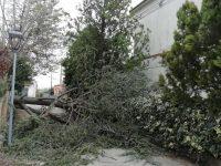 Il vento sferza la Valle, numerosi alberi caduti a Venafro e Pozzilli