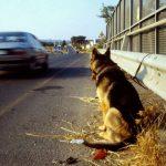 Abbandona il suo cucciolo in strada: scatta la denuncia