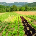 Macchiagodena, vetrina nazionale per gli orti innovativi di 'Naturavicina'