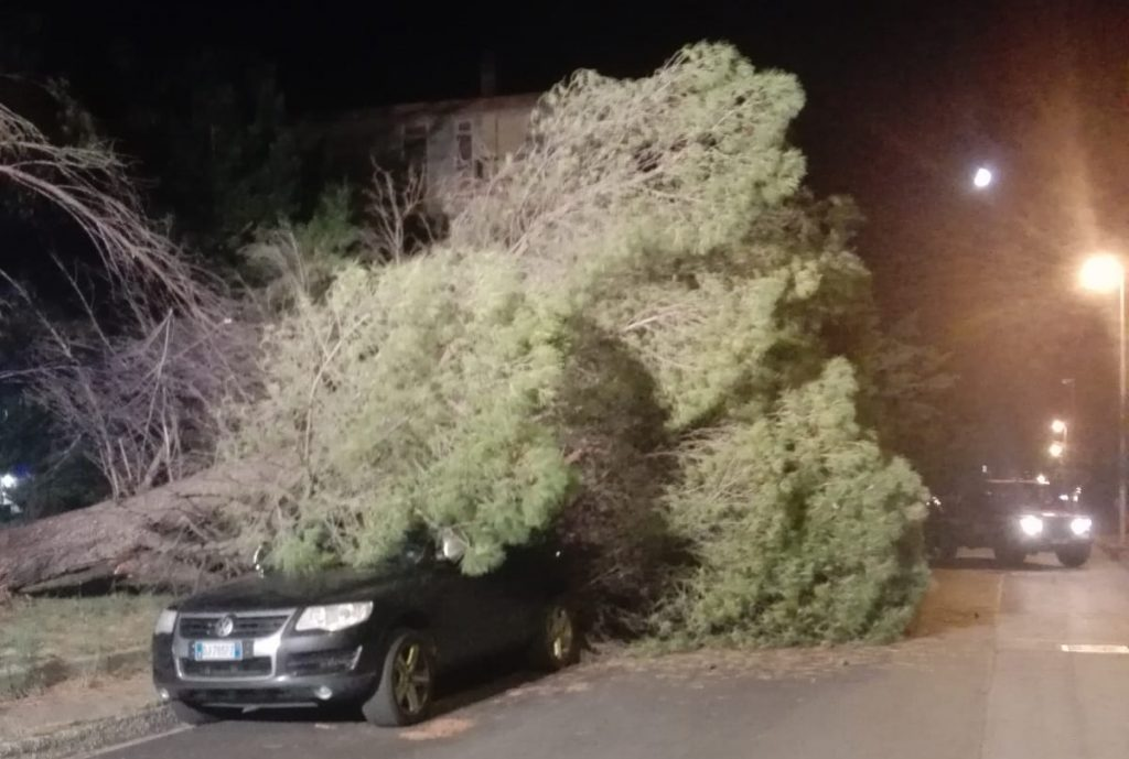 Termoli, grosso albero si abbatte su due auto in via Brasile