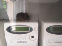 Bojano, case invase dai ratti: inquilini pronti a portare lo Iacp in tribunale