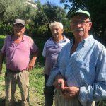 Allarme cinghiali ad Isernia: gli agricoltori vogliono soluzioni