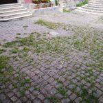 Erbacce nel centro storico di Venafro, gli abitanti sono stufi dell'incuria