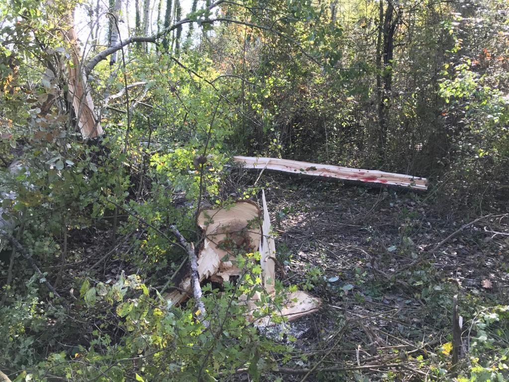 Tragedia nei campi a Santa Maria del Molise: pensionato muore travolto da un albero