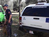 Montorio nei Frentani, otto cani avvelenati con esche: s'indaga