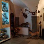 Tesori nascosti, visita nel Museo di Scienze Naturali di Agnone