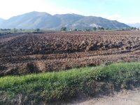 Turbogas, Nola lancia l'allarme: rischio danni alla produzione agricola