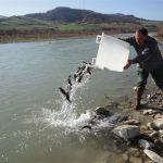 Valorizzare i fiumi e incrementare la pesca sportiva: torna il ripopolamento delle trote