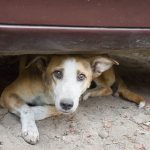 Street dog in New Delhi, India.