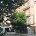 Campobasso, via Roma come una giungla: i rami raggiungono i balconi