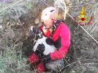 Pietracatella, finisce in un pozzo: cane salvato dai Vigili del fuoco