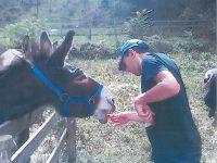'Somarando', a Carpinone gli animali diventano la terapia