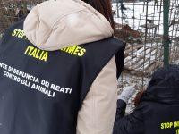 «Cani detenuti in un lager», movimento animalista denuncia un veterinario