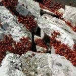 Civitanova del Sannio, migliaia di coccinelle si svegliano dal letargo